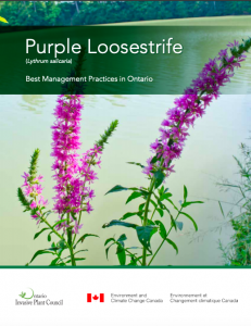 Purple loosestrife best management practices
