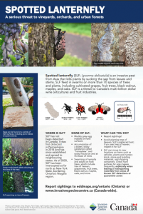 Spotted Lanternfly Fact Sheet EN